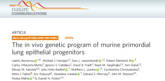 In vivo genetic program